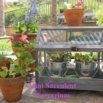 DIY miniature succulent terrarium