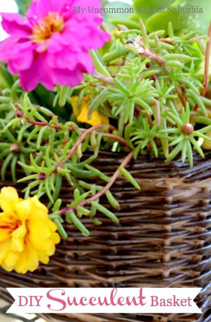 DIY Succulent Basket