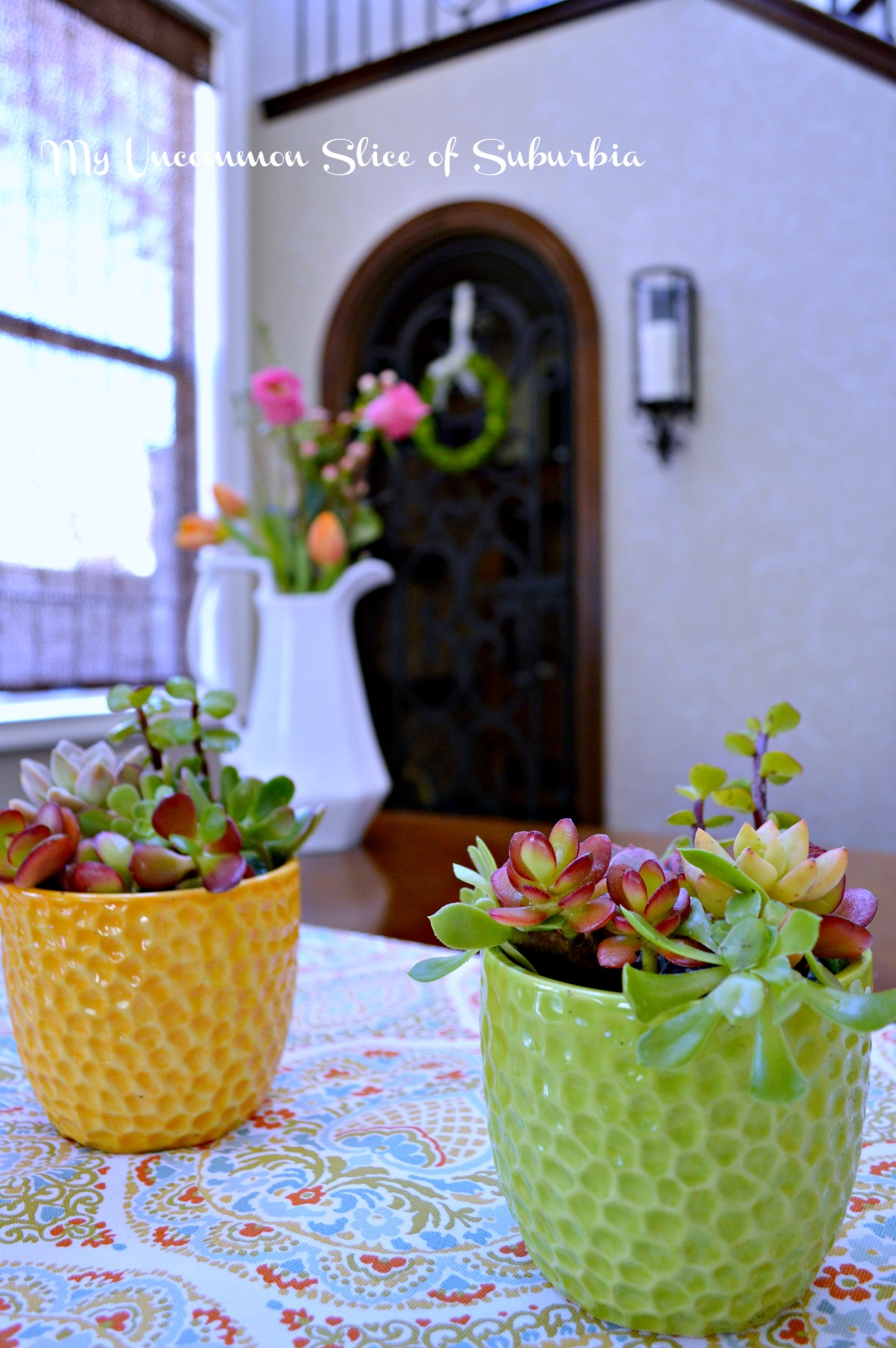 How to grow succulents indoors my uncommon slice of suburbia - Best succulents for indoors ...
