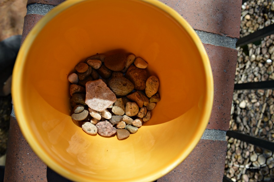Start with pebbles on the bottom of the pot when starting a succulent garden indoors