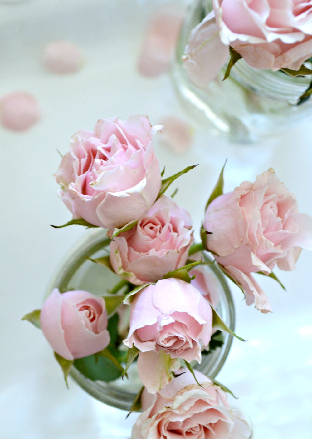 Simple display of baby pink roses, beautiful