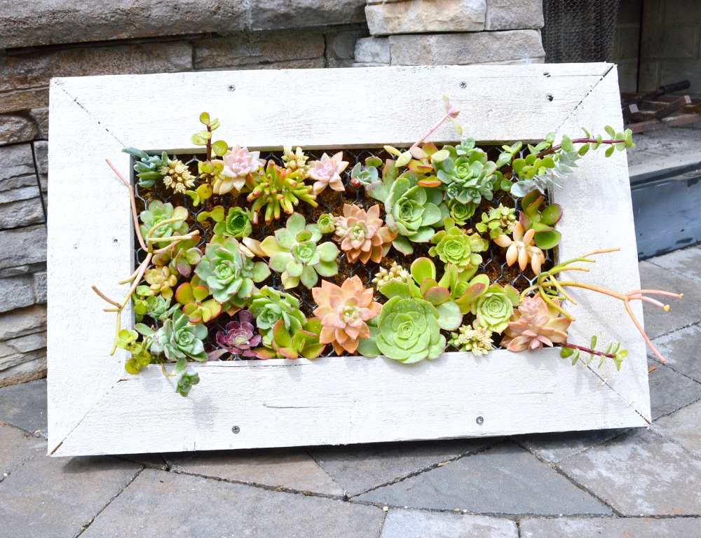 DIY Succulent Planter, fabulous tutorial
