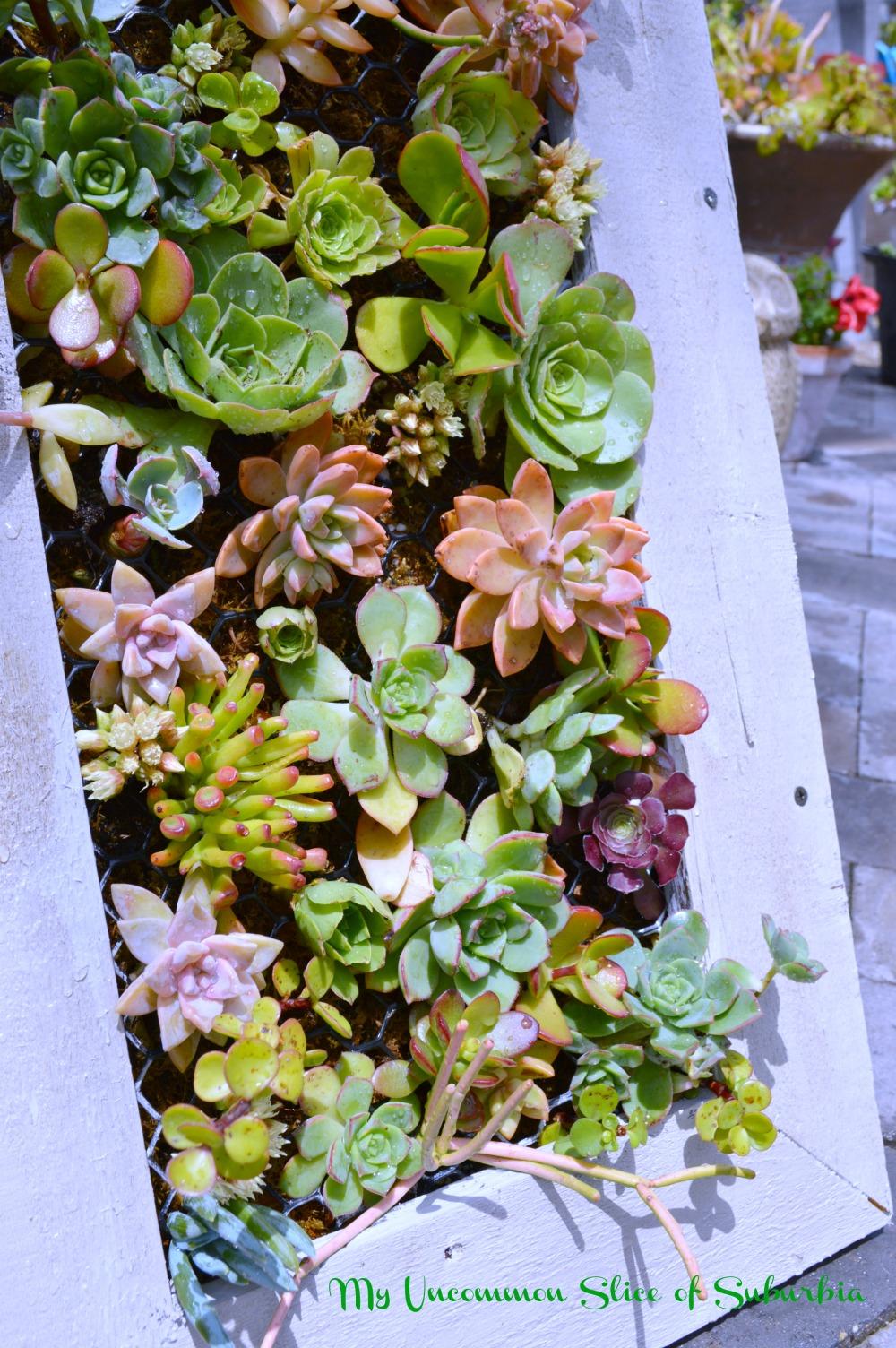Diy Hanging Succulent Planter My Uncommon Slice Of Suburbia