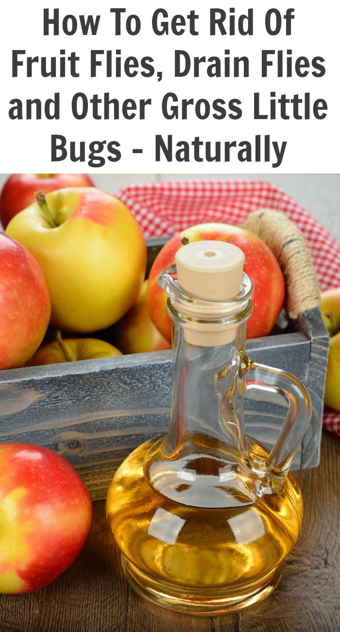 How-To-Get-Rid-Of-Fruit-Flies-Drain-Flies-and-Other-Gross-Little-Bugs-Naturally