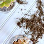 Mini Succulent Planters