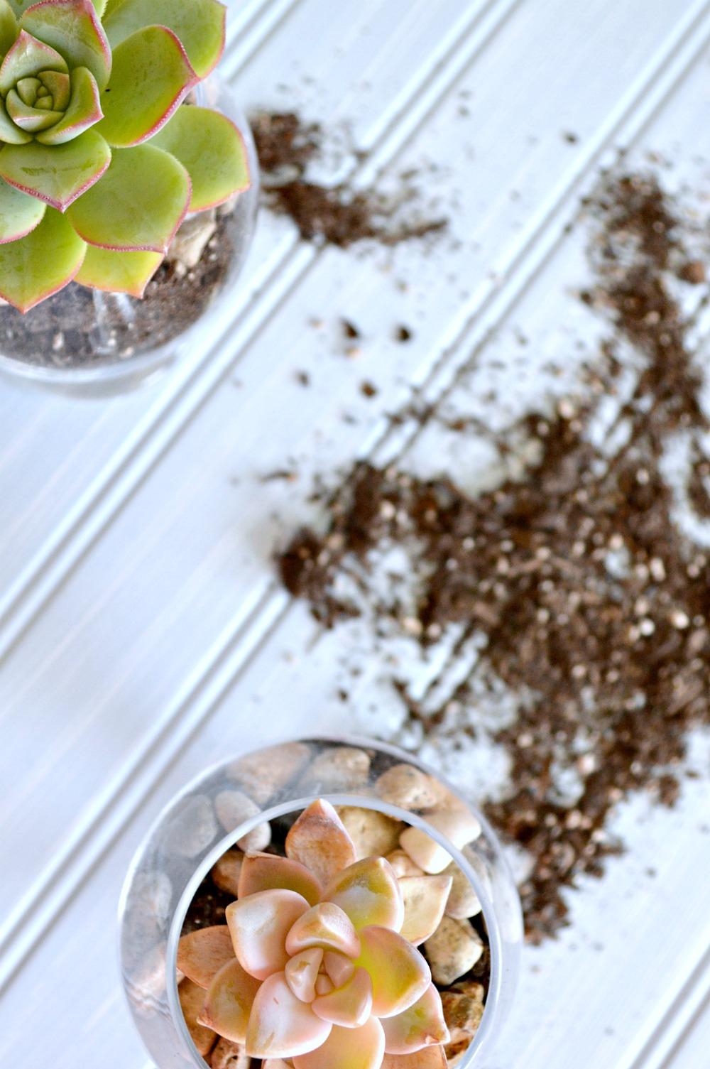 Mini glass succulent containers DIY