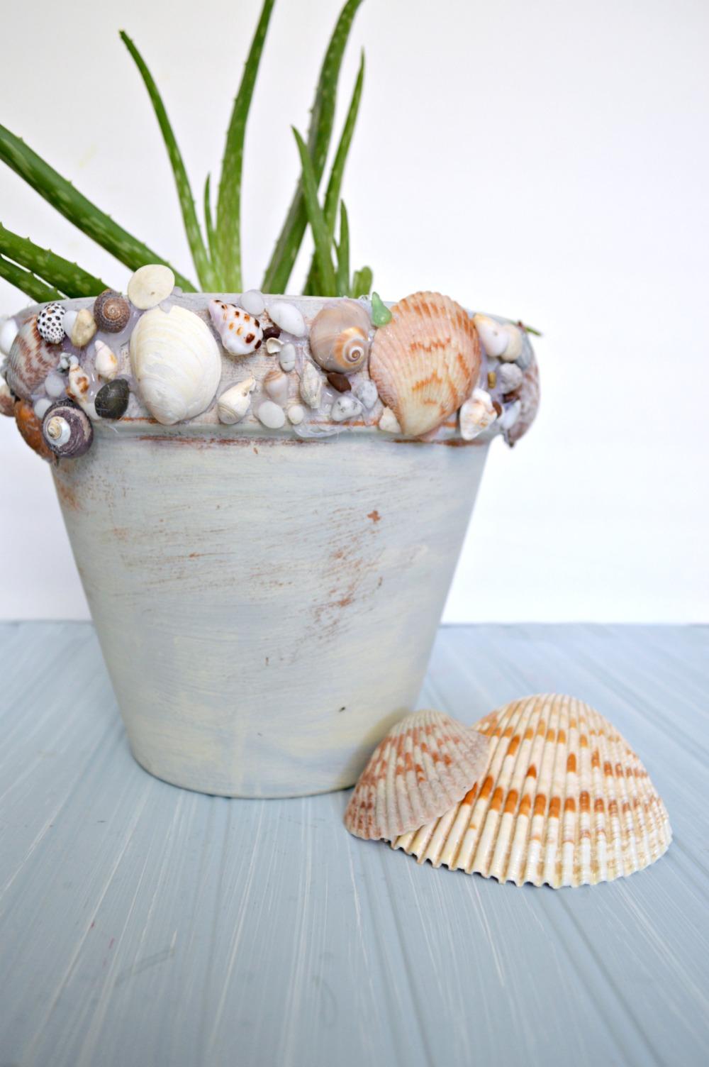 DIY Shell Pot, so easy to make!