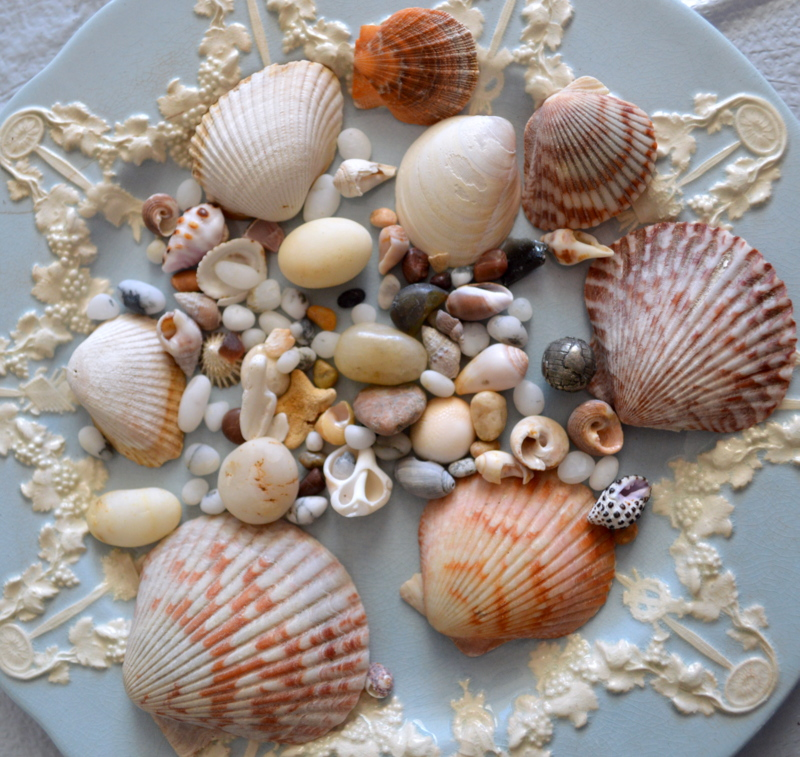 DIY Shell Pot, perfect way to add a little beachy elegance to anyone's decor