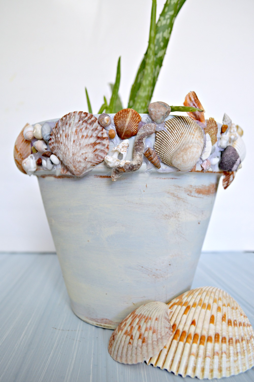 How to add shells to a pot for a beachy feel