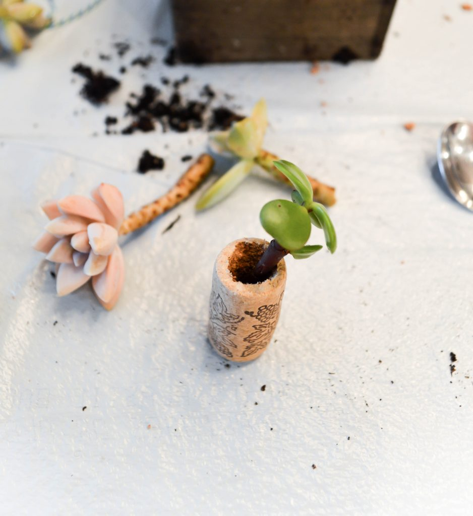 Step by step tutorial on how to make these wine cork succulent planters