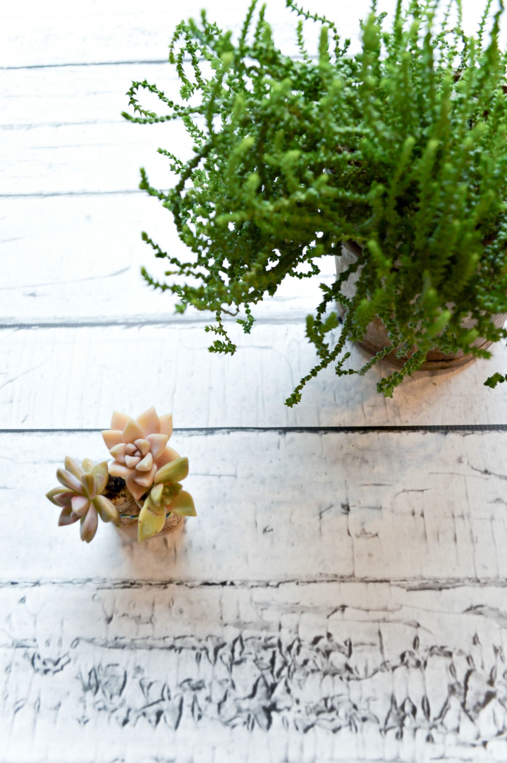 How to make a FUN Wine Cork Succulents