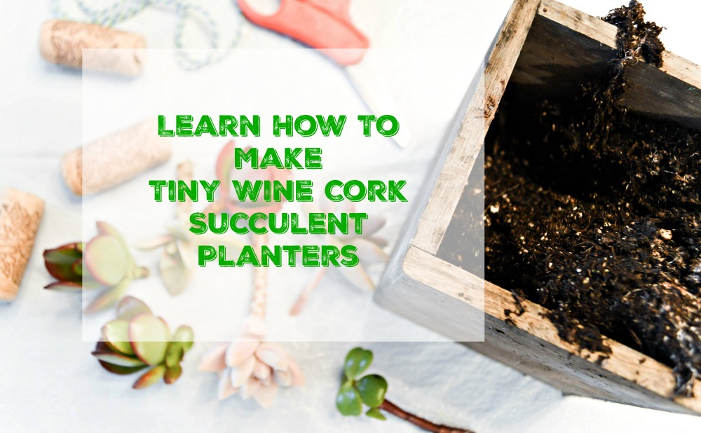 Such a fun and easy project and would make great gifts! Tiny Succulent Cork Planters