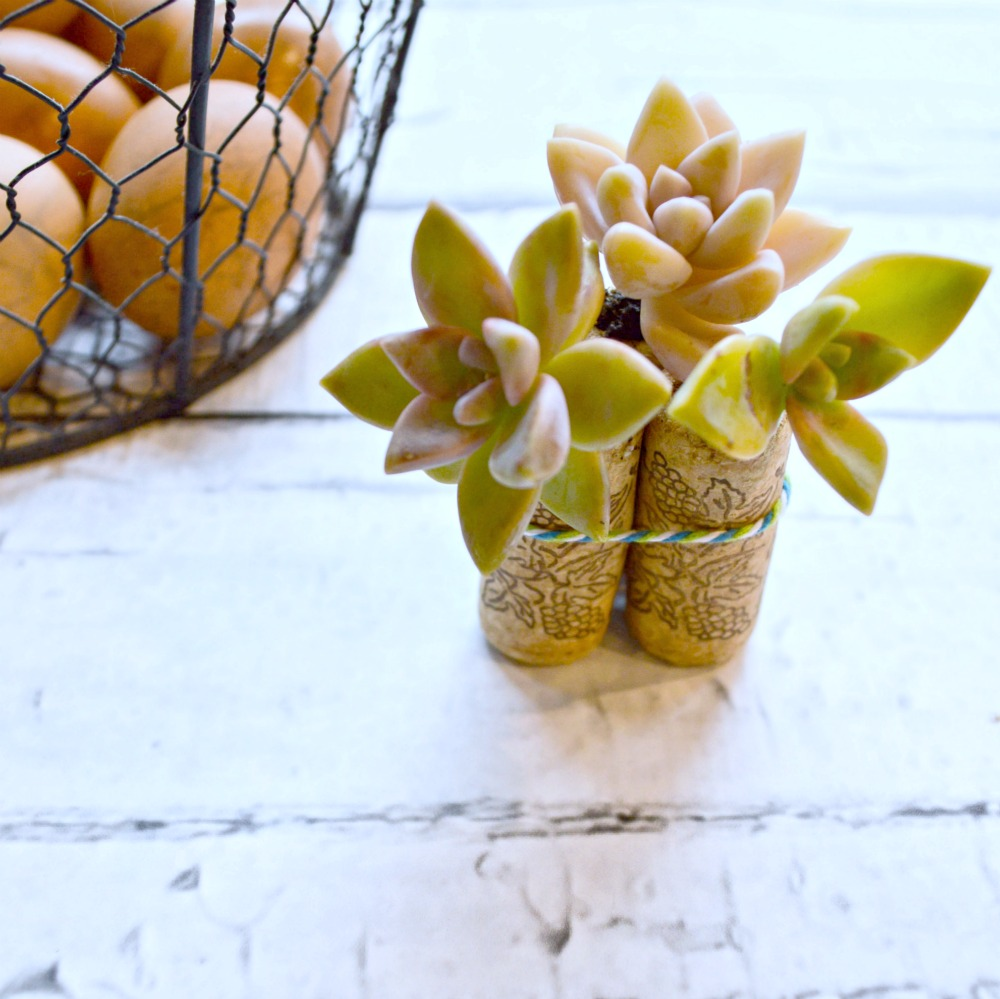 Such a fun project to make, wine cork succulent