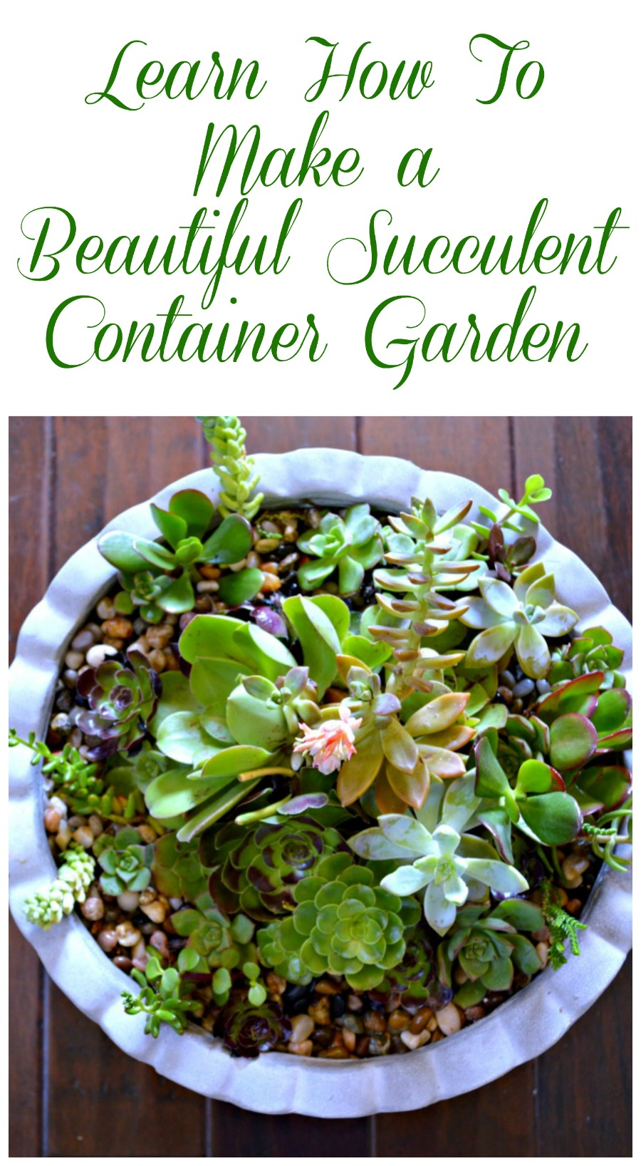 Diy succulent container garden my uncommon slice of suburbia - How to make a succulent container garden ...