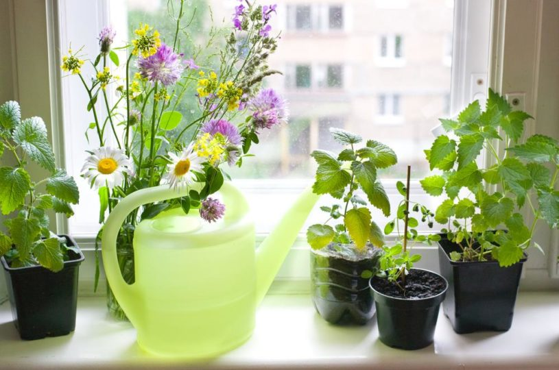 How to Easily Grow a Windowsill Herb garden, step by step tutorial that is easy to follow