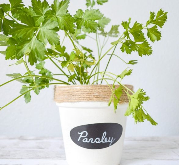 transform those pots into gorgeous herb gardens