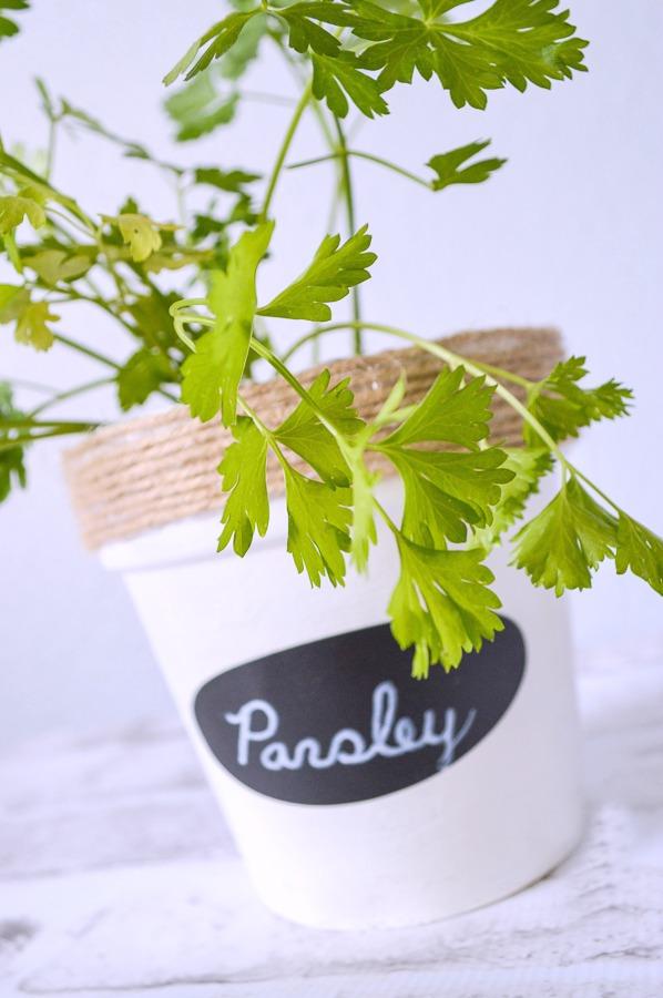 transform those pots into gorgeous herb gardens