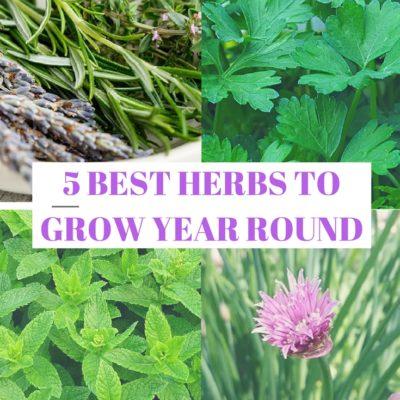5 Best Herbs to Grow Year Round