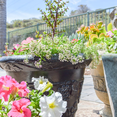 Take a dated old flower pot and give it a fresh coat of paint, great tutorial!