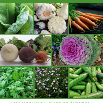 12 Vegetables to plant for your fall garden