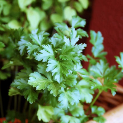 HOW TO successfully grow an indoor herb garden