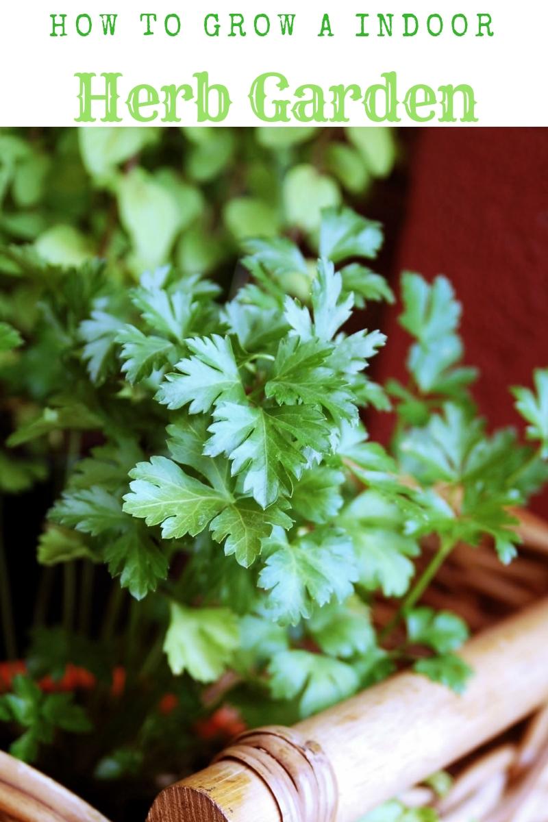 Starting An Indoor Herb Garden   My Uncommon Slice Of Suburbia